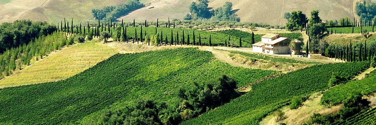 Admire the Vineyards and Olive Groves