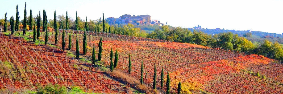 Red vineyards and Elice
